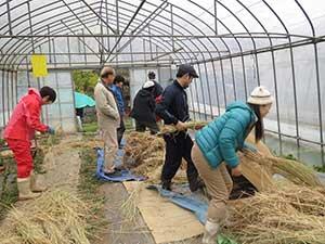 大豆の収穫をしている様子